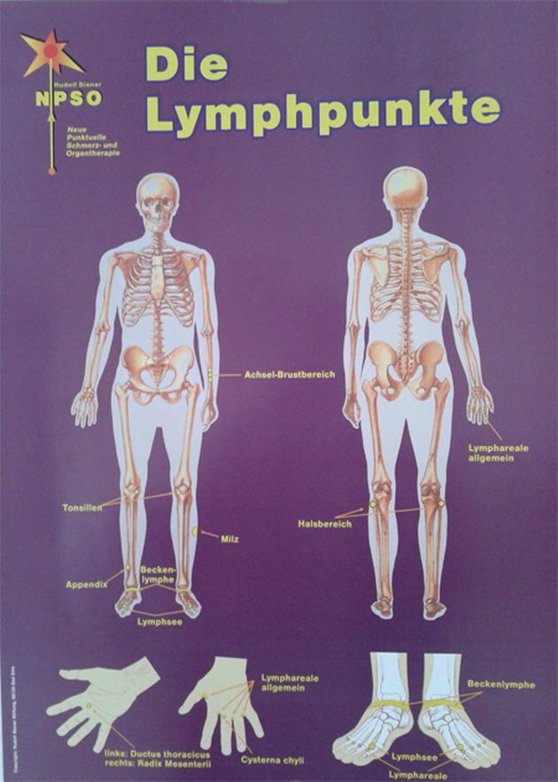 Das Lymphsystem DIN A2 – Rudolf Siener Stiftung
